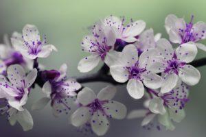 Übungstag Gewaltfreie Kommunikation - Blumenbild